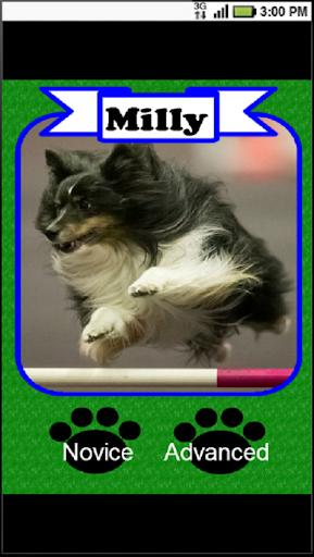 Dog Agility Game - Course Run