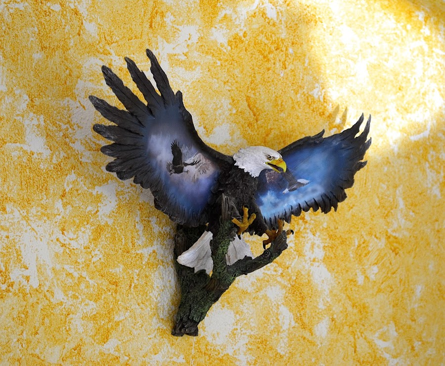 Plaster Eagle by Ed Hanson - Artistic Objects Other Objects ( eagle, mount, art, plaster, object, wall )