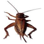 Cricket Sound Effects icon