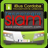 iBus Cordoba
