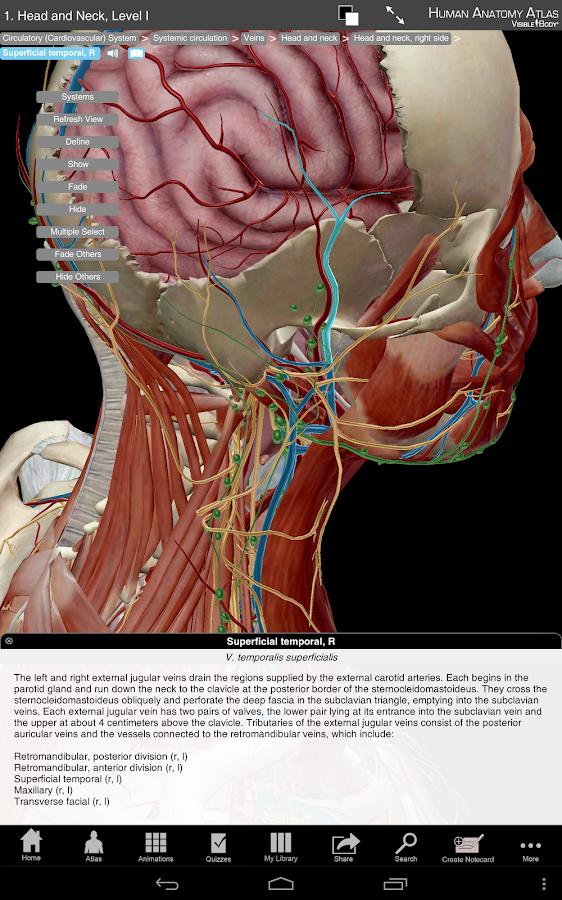 Human Anatomy Atlas SP - screenshot