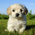 Your Dog Pet Friend icon