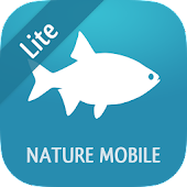 Fish 2 LITE - Field Guide
