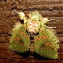Wavy-lined Heterocampa