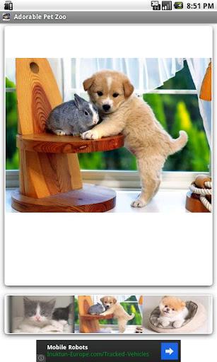 Adorable Pet Zoo