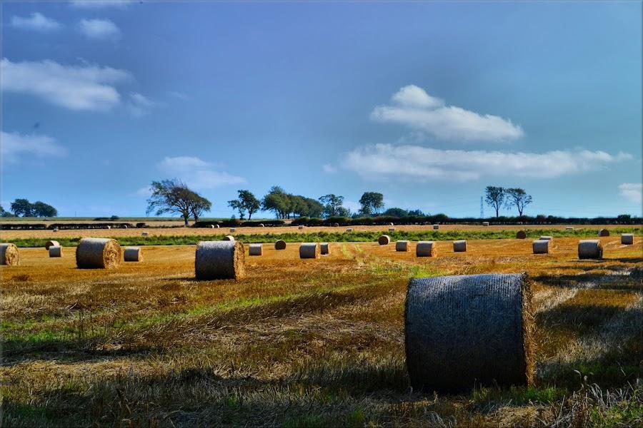 Hay bales by Nic Scott - Landscapes Prairies, Meadows & Fields ( field, hay bales, hay, fields,  )