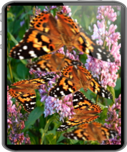 Butterfly Live Wallpaper LWP