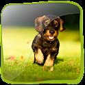 3D Dachshund Dog (PRO)