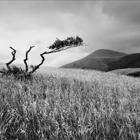 Vestige by Goran Popović - Landscapes Mountains & Hills ( hill, cb, mountain, peak, serbia, zlatibor, black&white )