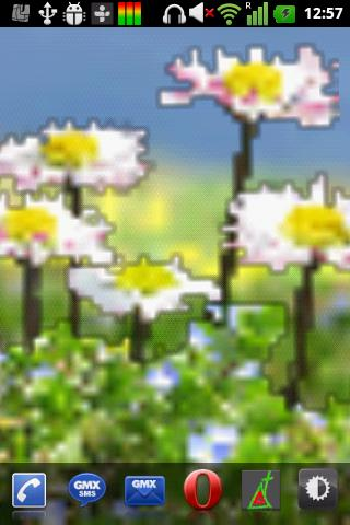 Daisy Flowers Free Wallpaper- screenshot