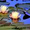 IMG_5878-ip_pe-WarmAndCool-lc.jpg