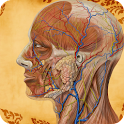 Visual Body Anatomy icon