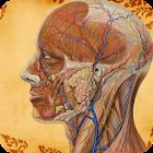 Visual Body Anatomy icon