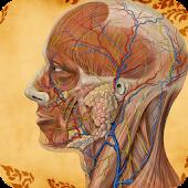 Visual Body Anatomy