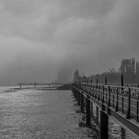 Alone by Alexandre Mestre - Black & White Landscapes ( park, fog, lisbon, bridge,  )