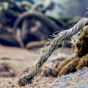 Rope by Barrington Dent - Landscapes Beaches