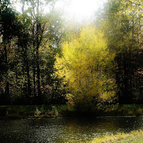 by Brenda Town-Meyerhoff - Landscapes Waterscapes