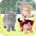 Talking Cat With Friends icon
