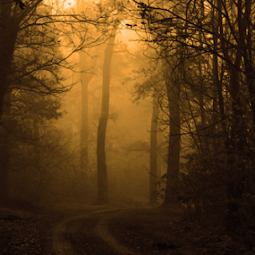 by Sanja Dedić - Landscapes Forests (  )
