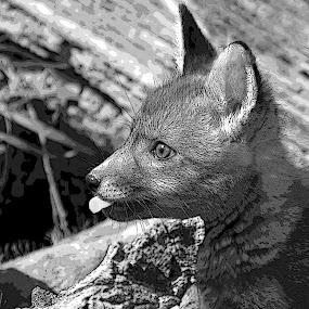 fox by Michael Smith - Digital Art Animals ( baby fox )