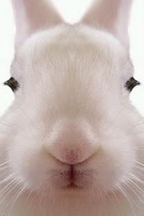 Rabbit LiveWallpaper- screenshot thumbnail