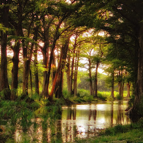 River Glow by Scott Walker - Nature Up Close Trees & Bushes ( peace, texas, cypress, glow, river )