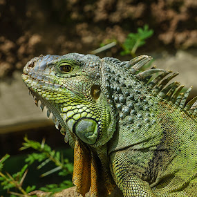 afternoon in the park  by Peter Schoeman - Animals Reptiles ( reptiles, sea, beach )