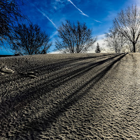 Winter Shadows by Anna-Lee Nemchek Cappaert - Landscapes Weather ( winter, cold day, afternoon sun, snow, trees, frozen, shadows )