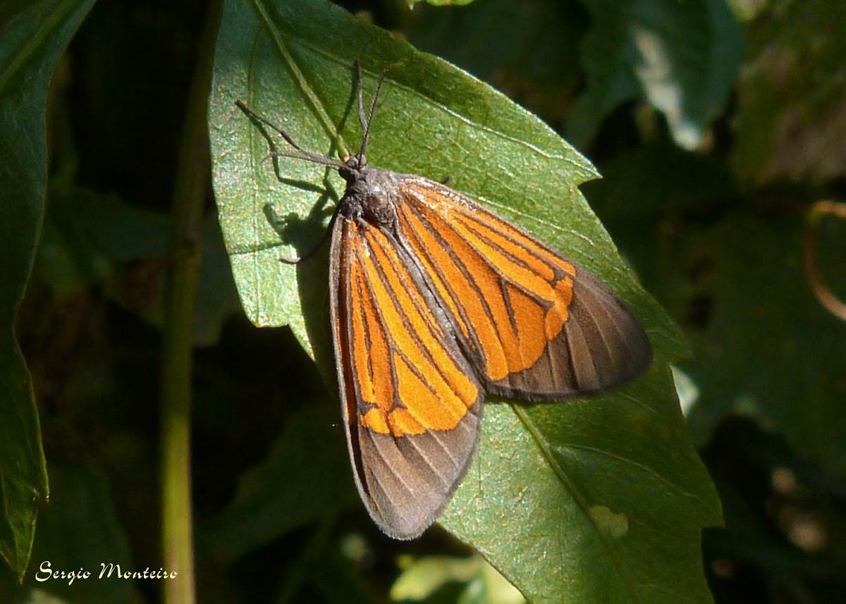 Orange and black tiger moth