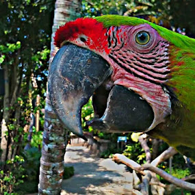 Hai by Merah Putih - Animals Birds