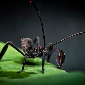 by Septyan Lestariningrum - Animals Insects & Spiders (  )