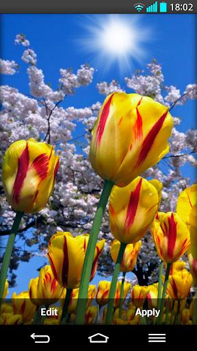 花卉 動態桌布
