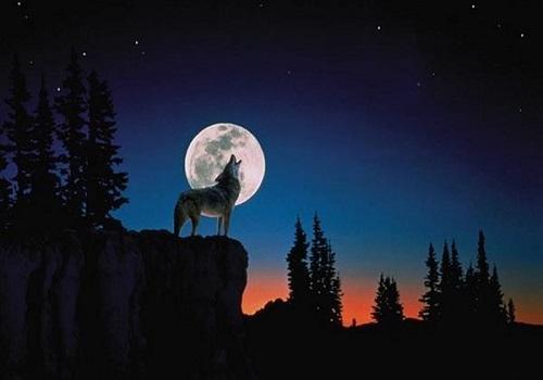 オオカミの壁紙