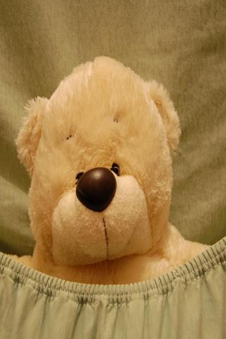 Teddy bears Wallpapers HD- screenshot