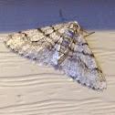 Half-wing Moth