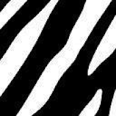 Zebra Keyboard Skin