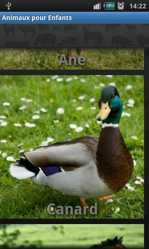 Animals Sound for Kids- screenshot