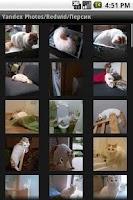 Screenshot of Yandex Photo Albums