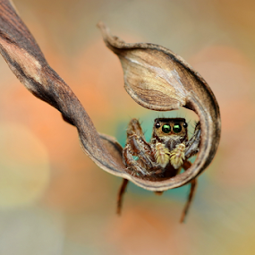 Swing by Niney Azman - Animals Insects & Spiders ( makro bokeh )