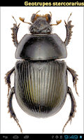 Screenshot of Coleoptera