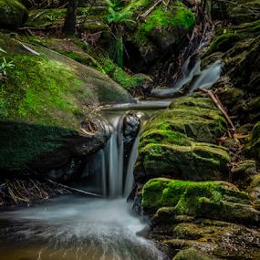 Cascade by Bradley Rasmussen - Landscapes Waterscapes ( water, royal national park nsw, kelly's falls, cascade, waterfall, creek, moss, rainforest )