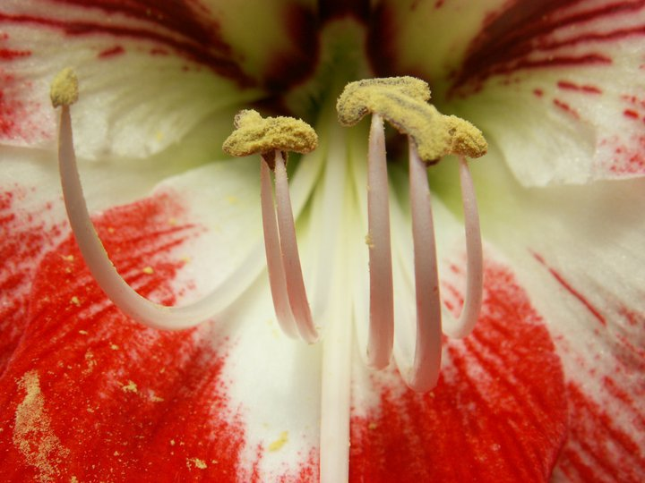 Red flower by Katja Spehar - Nature Up Close Gardens & Produce