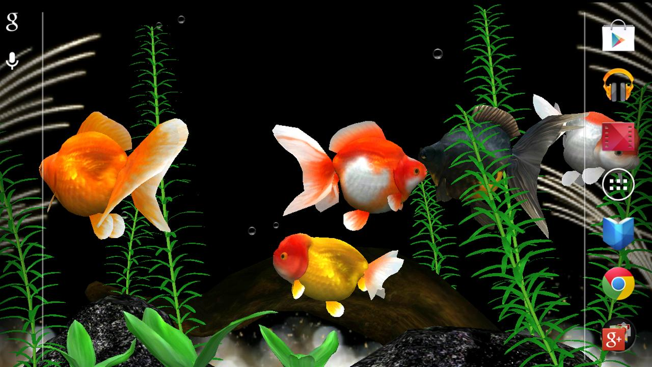 Fish aquarium live wallpaper - Gold Fish 3d Live Wallpaper Screenshot