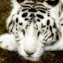 Bengal Tiger Live Wallpaper logo