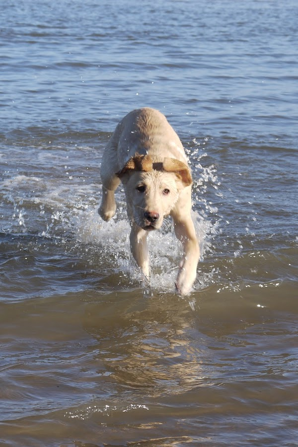 by Andrew Benn - Animals - Dogs Playing