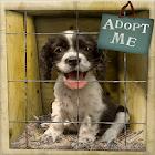 DOG ADOPTION INFO FOR 2019 icon