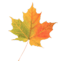 Autumn Leaves Donate LWP logo