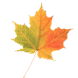 Autumn Leaves Donate LWP