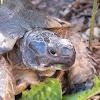 Unidentified tortoise