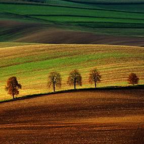 after harvest.../ po žních.... by Irena Brozova - Landscapes Prairies, Meadows & Fields (  )